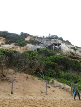 Photo of Melbourne Great Ocean Road Day Trip Adventure from Melbourne Steps up and down to beach are not overly stressful