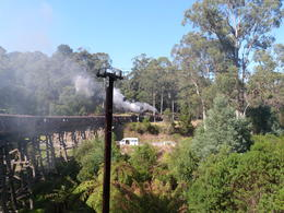 Photo of Melbourne Puffing Billy Steam Train, Yarra Valley and Healesville Wildlife Sanctuary Day Tour such a lovely journey