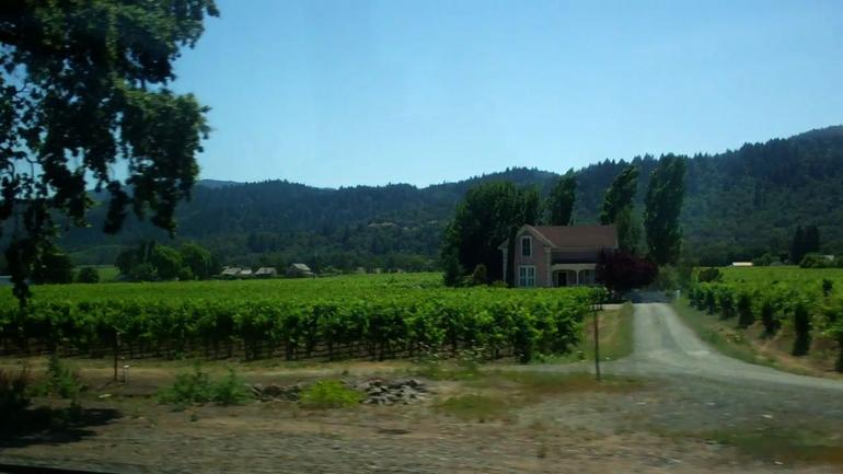 View of the Vineyards! - San Francisco