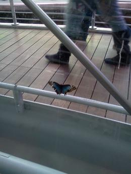 Photo of San Francisco Skip the Line: California Academy of Sciences General Admission Ticket butterfly