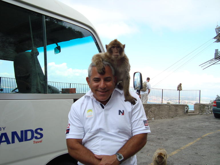 Gibraltar monkeys are very photogenic! - Costa del Sol