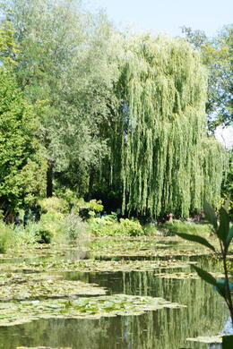 Photo of Paris Giverny and Monet willow tree