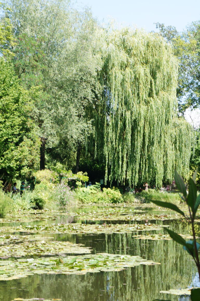 willow tree - Paris