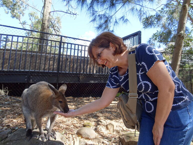 Earl the Red Neck Wallaby - Sydney