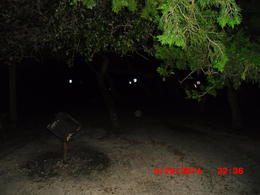 Photo of St Augustine Ghosts and Gravestones - St Augustine orb in woods