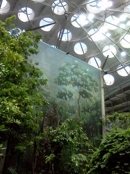 Photo of San Francisco Skip the Line: California Academy of Sciences General Admission Ticket 4-story rainforest