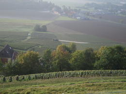 View down the Marne Valley, on the way to Epernay , Erin S - September 2014