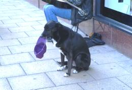 A dog holding a cap for donations for a street muscian. , Bruce - June 2011