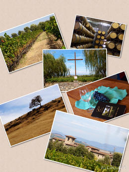 The wineries in Sonoma , Kat - September 2014