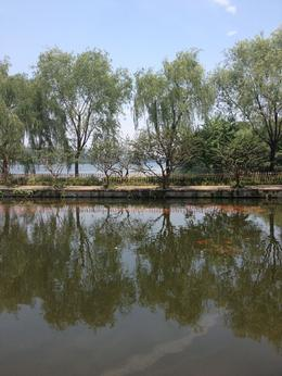 West Lake in Hangzhou, Cat - July 2012