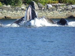 Photo of Juneau Juneau Whale Watching Adventure and Mendenhall Glacier Tour WOW!!!