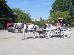 Finally got my family to do a carriage ride with me as normally all the answer I get is We have enough horses at home and to their surprise they enjoyed it. , kim t - September 2015
