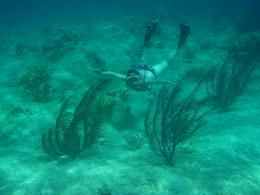 Photo of Nassau Nassau Snorkel Bahamas Adventure Mermaid?
