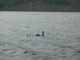 Photo of Glasgow Loch Ness, Glencoe and the Highlands Small Group Day Trip from Glasgow Nessie