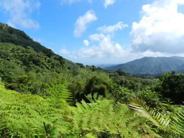 Photo of San Juan El Yunque Rainforest Half-Day Trip from San Juan Puerto Rico Feb 2013