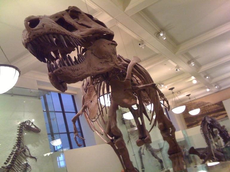 At the Natural History Museum - New York City