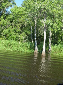 Photo of New Orleans Experience Cajun Country: Swamp Boat Adventure and Plantations Full-Day Tour from New Orleans Nature