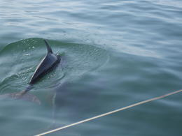 Photo of Puerto Vallarta Day Sailing on Banderas Bay Dolphins