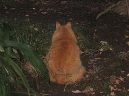 This Giant Cat lives in Sankeien garden , Olga N - January 2014