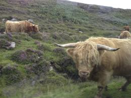Taken during our 5 day tour of the Highlands and Isle of Skye , Antony D - August 2014