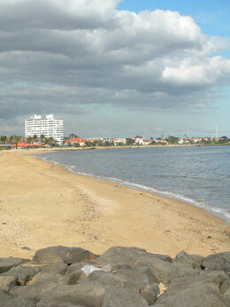 St. Kilda, Melbourne, Cat - December 2011