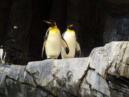 You can stand right next to the penguins. , juliansg06 - May 2014
