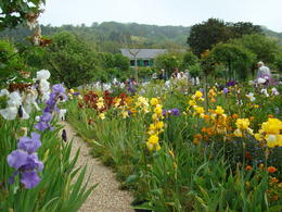 Garden at Giverny , Robert S - May 2012