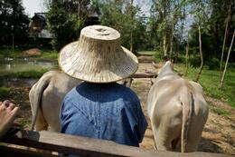Photo of Bangkok Khao Yai National Park and Elephant Ride Day Trip from Bangkok The View On the Ox Cart Ride