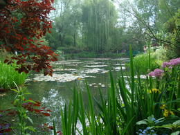 Lily pond at Giverny , Robert S - May 2012