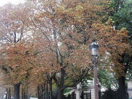 Fall in Paris , Marcelle G - October 2014