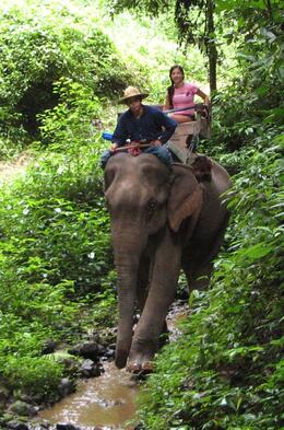 Nicole riding the elephant in Chiang Mai., Carolyn G - August 2008