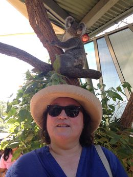 We loved the Koalas. , lisaA - March 2016