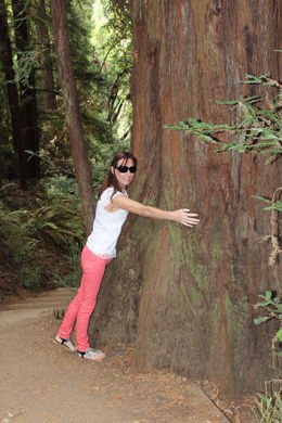 i am a nature lover and always wanted to see muir woods and hug a tree , maureen d - September 2015
