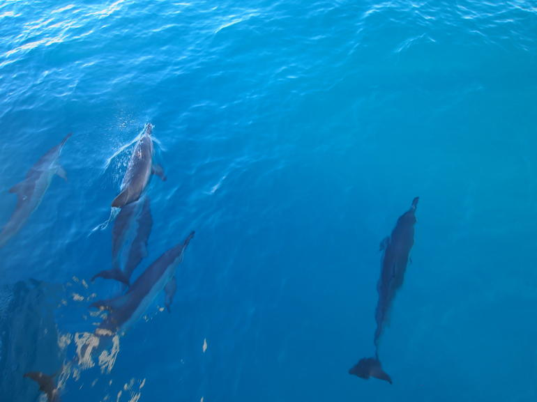 Dolphin spotting on the Na Pali cruise - Kauai
