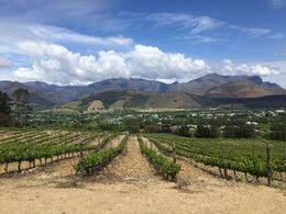 View from the tasting patio at Dieu Donne winery in Franschhoek. , Bernadette L - October 2015