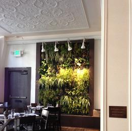Great nature wall in one of the restaurants , Susan S - September 2013