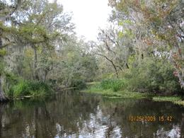 Photo of New Orleans Small-Group Swamp Boat Tour of Cajun Country from New Orleans A side slough