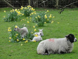 Garden at the Hill Top Farm , Sawitree B - April 2012
