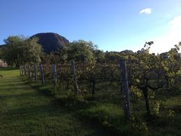 Photo of Sydney Hunter Valley Wineries and Wilderness Small-Group Tour Hunter Valley Wine Tour