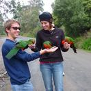 Photo of Melbourne Great Ocean Road Small Group Eco Tour from Melbourne Lorikeet adventure!