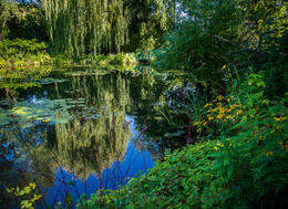 The reflections on the waterlily pond are incredible , Gary B - October 2013