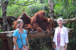 Photo of Singapore Singapore Zoo Breakfast with Orangutans A great morning at the Zoo