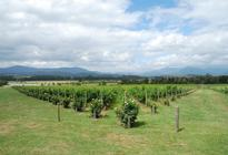 Photo of Melbourne Yarra Valley Wine and Winery Tour from Melbourne
