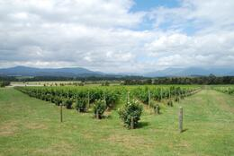 Photo of Melbourne Yarra Valley Wine and Winery Tour from Melbourne Yarra Valley Wine Tasting: Domaine Chandon view