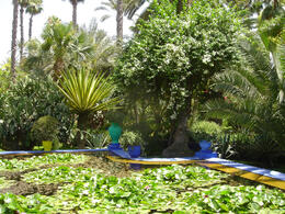 Photo of   Lily Pads at Majorelle Garden in Marrakech