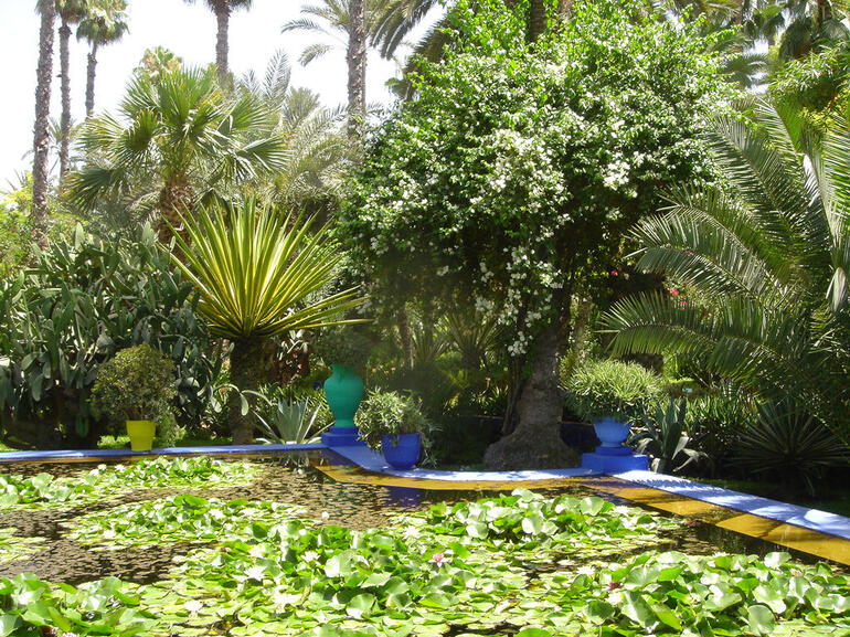 Lily Pads at Majorelle Garden in Marrakech - Marrakech