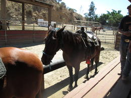 Photo of Anaheim & Buena Park Los Angeles Horseback-Riding Tour to the Hollywood Sign Lining up the horses