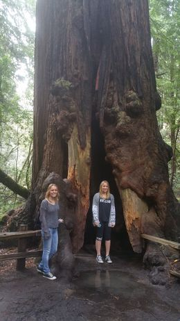 Photo of San Francisco Muir Woods, Giant Redwoods and Sausalito Half-Day Trip Biggest Coastal Red Wood