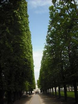 Tree lined walk ways as you approach the main garden, Frances - October 2010
