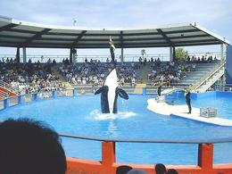 Photo of   Miami Seaquarium Lolita